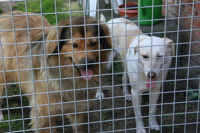 Marley und Mara haben sich den ganzen Tag vorbildlich hinter dem Zaun verhalten. Toll!!