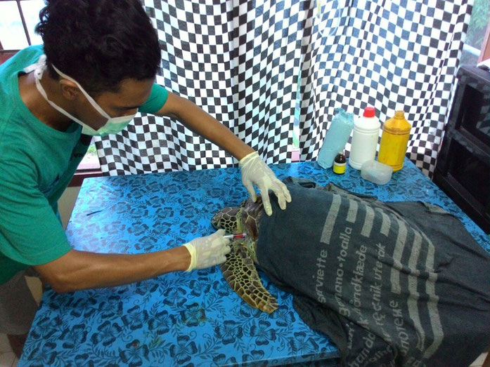 turtle bali
