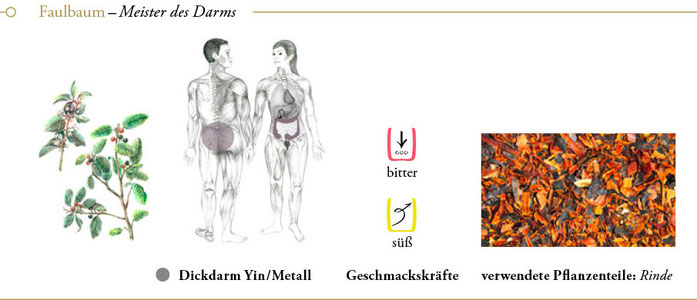 bild: faulbaum ueberblick header meisterkraeutertherapie c wolfgang schroeder verlag der heilung