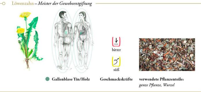 bild: löwenzahn loewenzahn ueberblick header meisterkraeutertherapie c wolfgang schroeder verlag der heilung