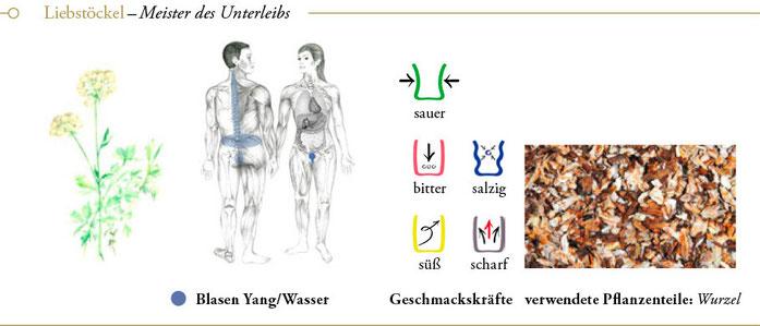 bild: liebstöckel liebstoeckel ueberblick header meisterkraeutertherapie c wolfgang schroeder verlag der heilung