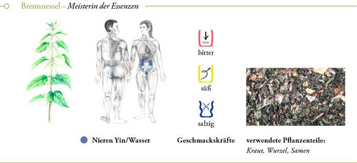 bild: brennnessel brennessel ueberblick header meisterkraeutertherapie c wolfgang schroeder verlag der heilung