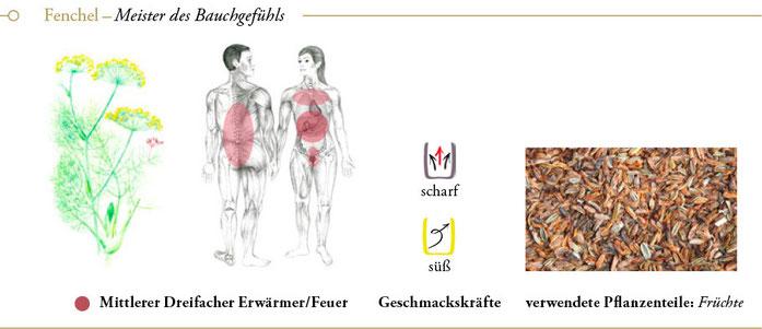 bild: fenchel ueberblick header meisterkraeutertherapie c wolfgang schroeder verlag der heilung
