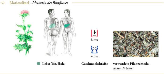 bild: mariendistel ueberblick header meisterkraeutertherapie c wolfgang schroeder verlag der heilung