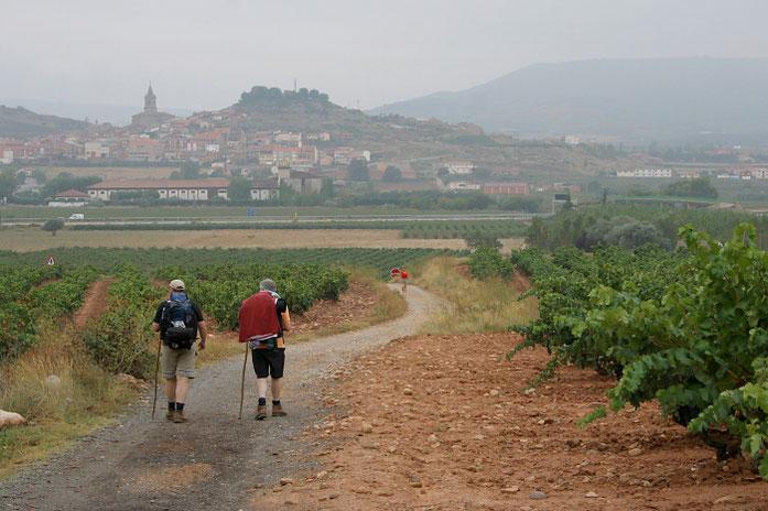 Kelias per Riochos vynuogynus / Foto: Kristina Stalnionytė