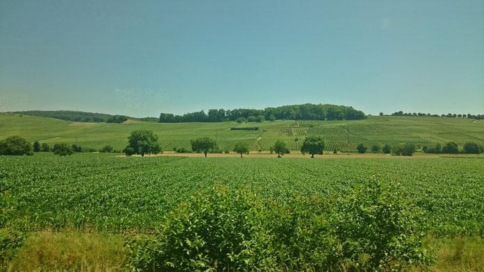 Landschaft im Rheintal bei Offenburg
