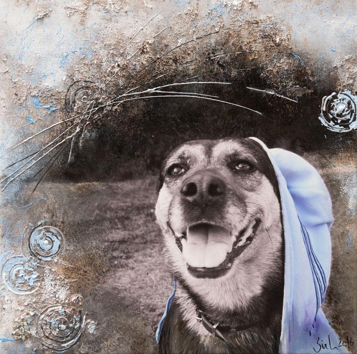 Kessy, mein Schäferhund-Rotti-Mädchen