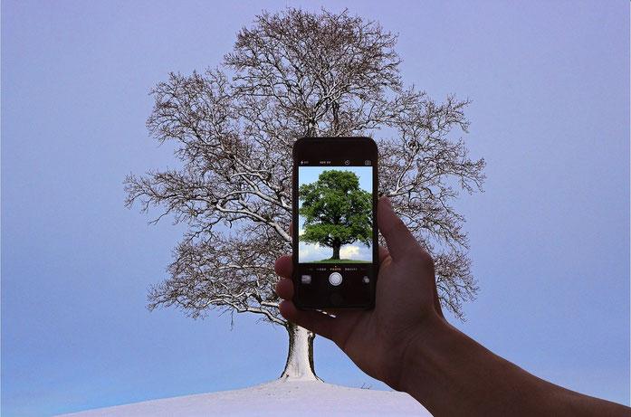 smartphone photographiant un arbre hivernal apparaissant feuillu sur la photo