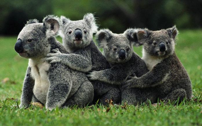 vivir en australia - trabajar en australia - emigrar a australia - estudiar en australia