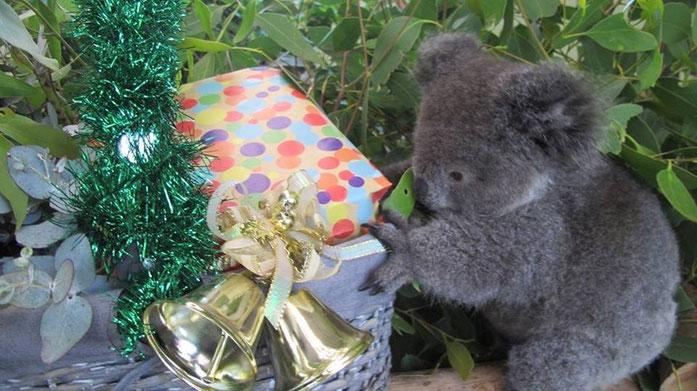 emigrar a australia - trabajar en australia - vivir en australia - visa australia
