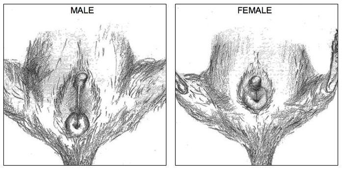 Male (left) - female (right)