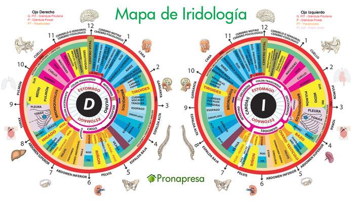 Mapa de Iridología