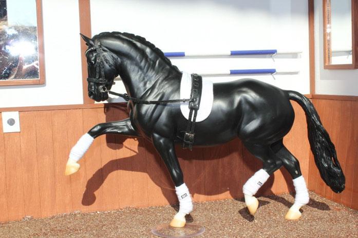 Longenarbeit hier mit bravem Pferd ohne Longe ;)