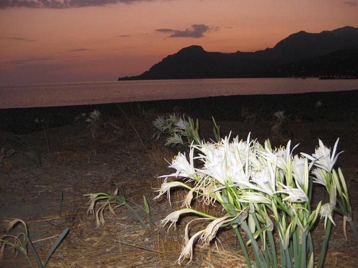 Wer weiß, wie diese tapferen Blumen heißen? Wachsen aus dem Sand!
