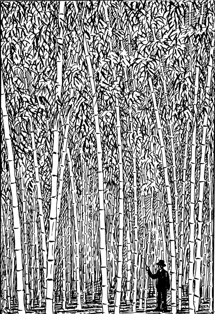BU211F018_«Bamboo (PSF)» par Pearson Scott Foresman — Archives of Pearson Scott Foresman, donated to the Wikimedia Foundation→Cette image a été extraite d'un autre fichier : PSF B-70006.png.. Sous licence Domaine public via Wikimedia Commons - https://c