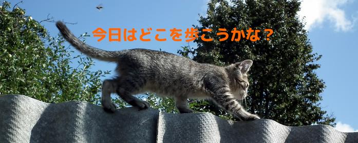 猫目線で街を歩いたらどんな風に見えるのでしょうね?