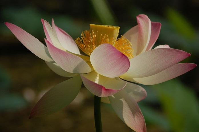 Arbol en flor