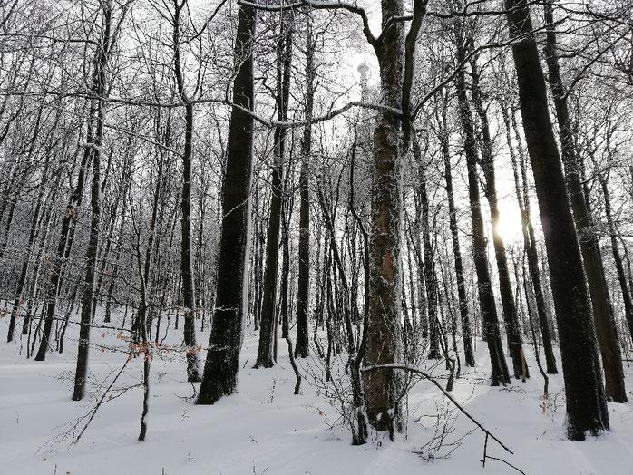 Kraftquelle, Wochenrückblick, Wochenlieblinge, Schneelandschaft, Kraftquelle Schnee, Kraftquelle Winter, Auszeit in den Bergen, Kraft im Winter tanken