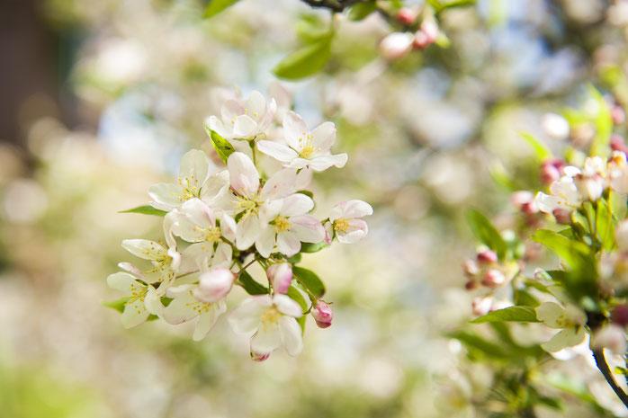 Een combinatie van bloemknoppen met bloemen geheel in bloei tegen een wat onrustige achtergrond. Door dichterbij te fotograferen wordt de achtergrond rustiger . 50mm lens, f4.5, 1/125, iso 200
