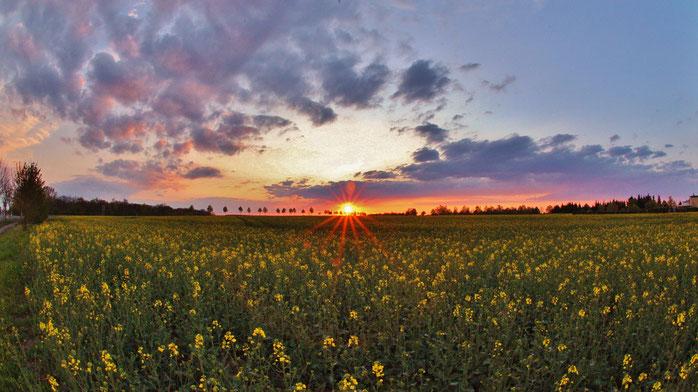 Sonnenuntergang in Hohenerxleben (Foto: bbglive.de)