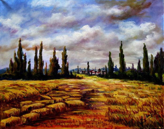 Campos en veranos. Óleo sobre lienzo de 50 x 40