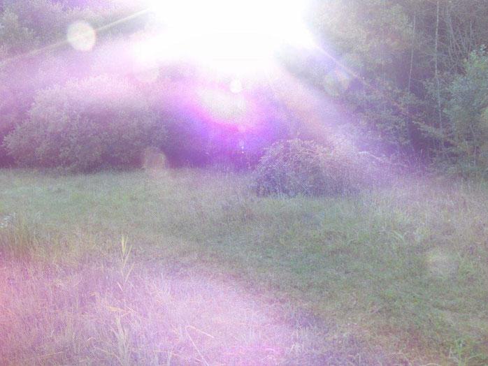 Farbenrausch in violett und weiß, www.lichtwesenfotografie.com