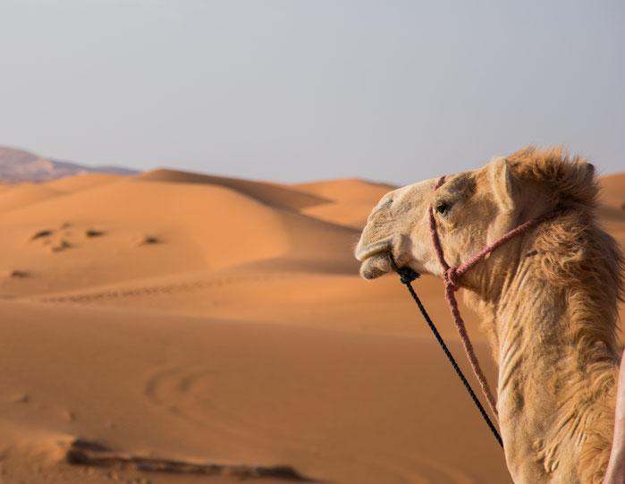 Gita in dromedario ad nel deserto a Erg Chebbi