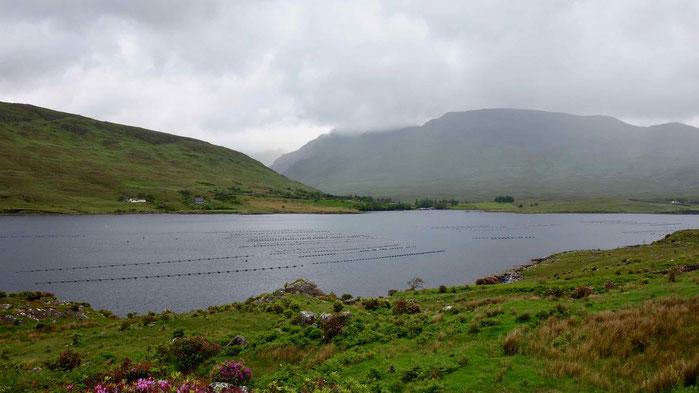 Killary Fjord, Irland