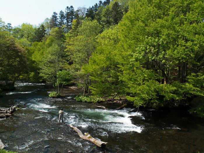 阿寒川といえば、特筆すべきはなんといってもそのロケーション。イタヤカエデやダケカンバなどが森を彩り川辺の石は苔むしていて、水源としての原始の森のおもむきを今に伝えている。流れに立てるだけで幸せになれるような。