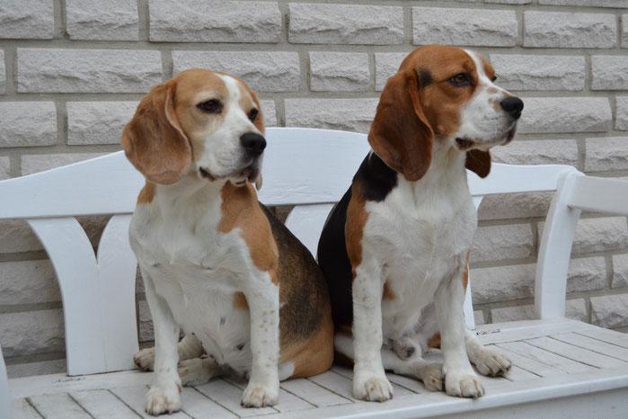 Little King Arthur Beagle Gütersloh