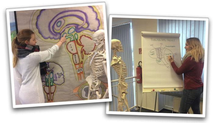 Schülerinnen im Anatomie-Unterricht