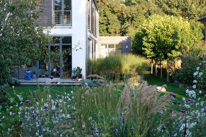 dieartigeGARTEN - abendlicher Garteneinblick Ende Oktober
