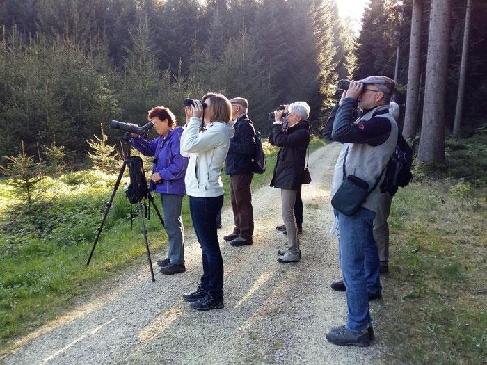 Was gibts denn hier zu sehen...  erfolgreiche Vogelexkursion im Wald