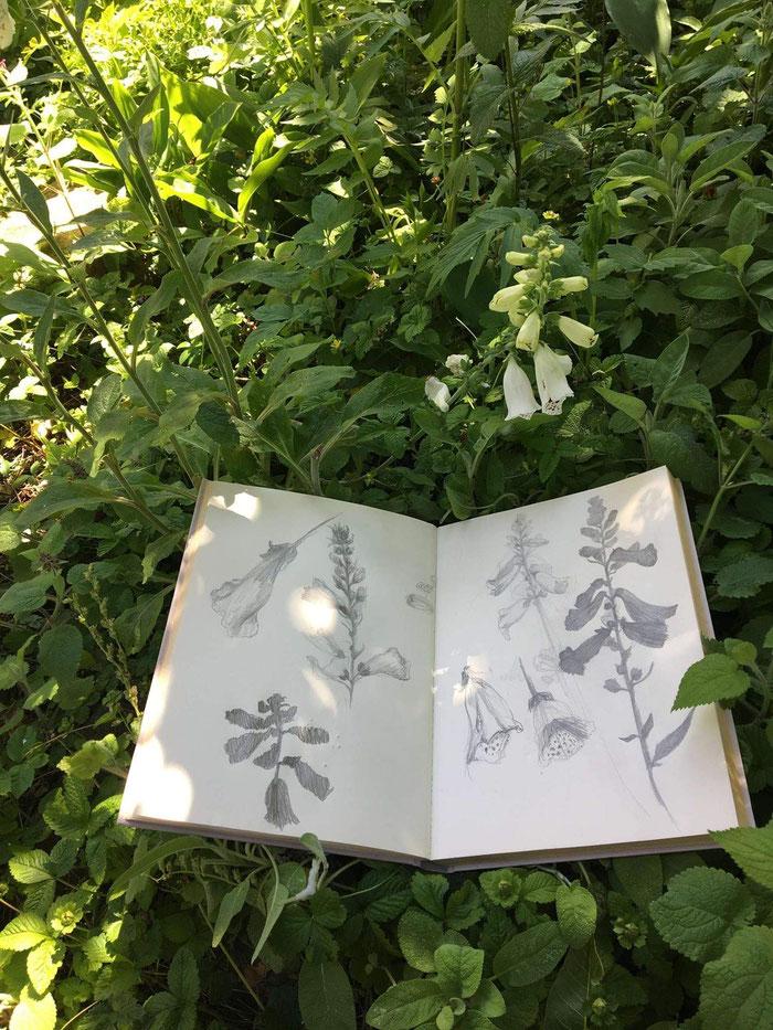 Veldwerk in Caroline's tuin