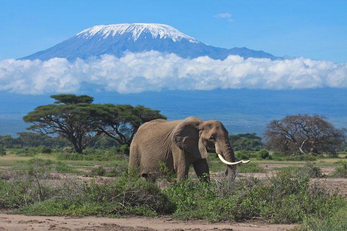 2015 AFRIKA  -  TANSANIA  -  MT.MERU  -  KILIMANJARO - SAFARI