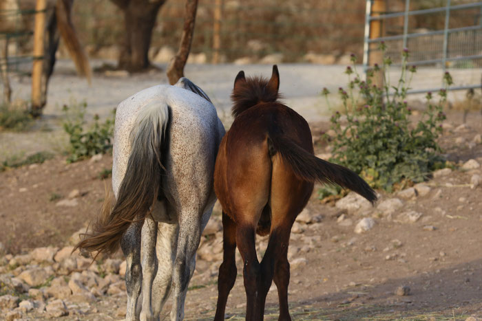 Rescue Mare and her mule foal walking together