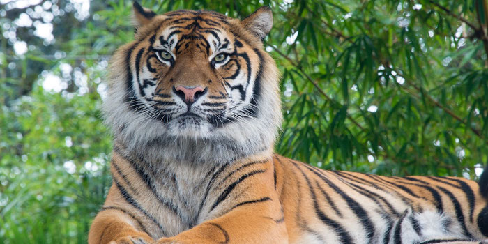 Don't Support These Animal Tourist Attractions