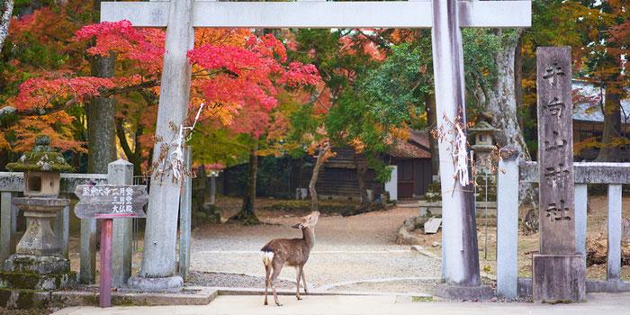 Visit the Nara Deer