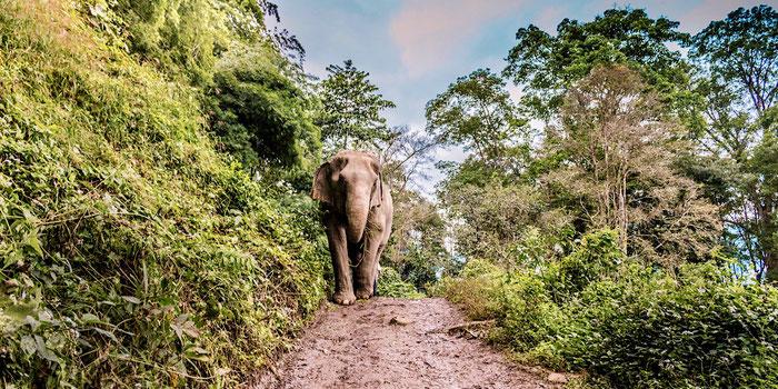 Visit Elephant Nature Park