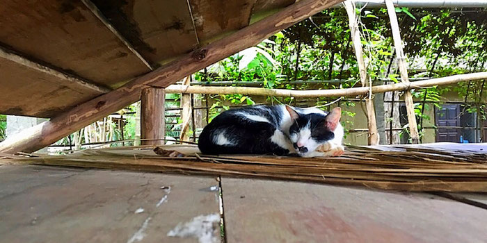 cat napping at elephant nature park in thailand