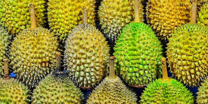no durian on public transport in singapore