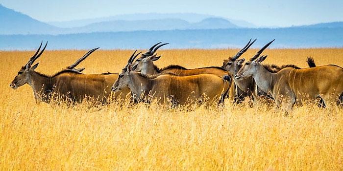 herd in kenya