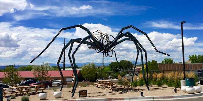 meow wolf spider
