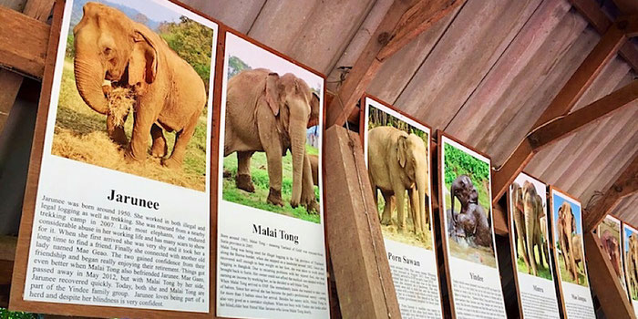 rescued elephant histories at elephant nature park