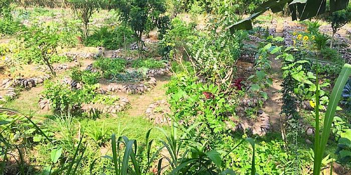 moksa permaculture garden in ubud bali