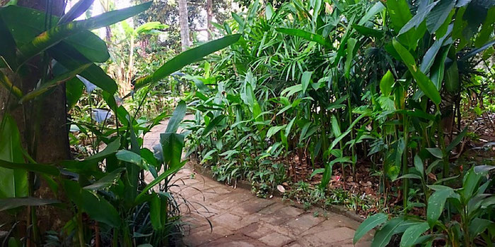 moksa jungle entrance ubud bali indonesia