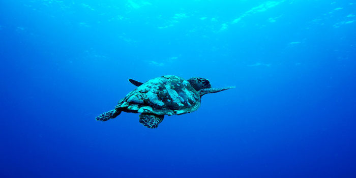 How to Find a Dive Resort and Liveaboard Suited for Vegan Travelers