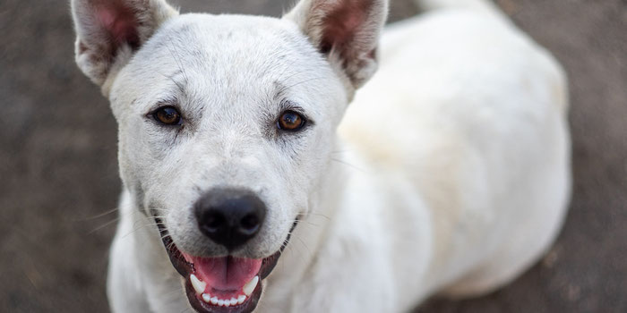 Help BAWA Save Dogs in Bali
