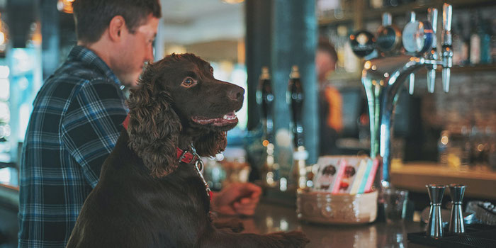 Dog in pub
