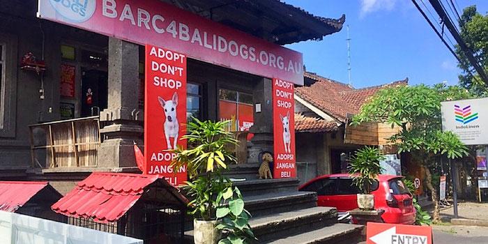 barc dog rescue ubud bali